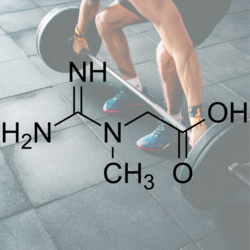 Creatine Briefly Explained